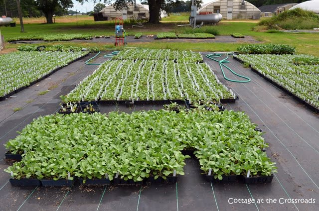 transplants from J&W Greenhouses