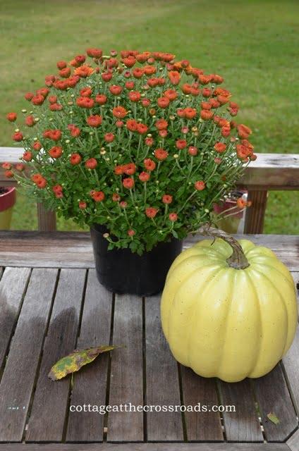 fall mum and a plastic pumpkin