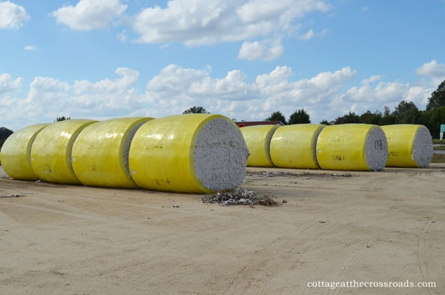 round bales of cotton