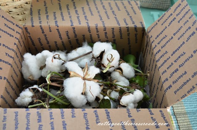 box of cotton