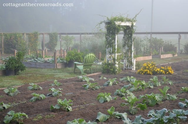 Fall garden in the morning