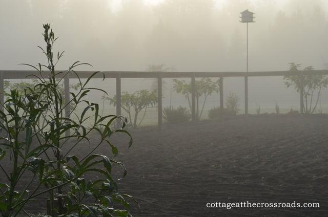 foggy morning in the garden