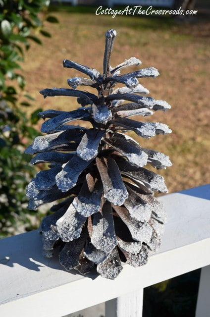 decorated pine cone outside