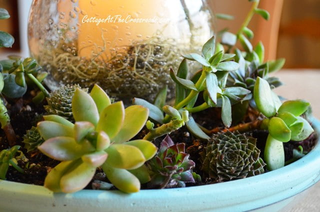 Succulent Centerpiece2