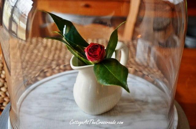 camellia blossom under a cloche