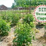 DIY Tomato Cages | Cottage at the Crossroads