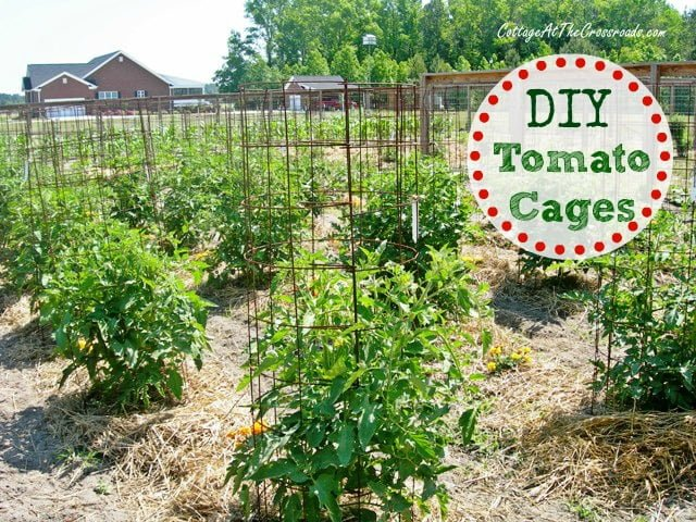 DIY Tomato Cages from Cottage at the Crossroads