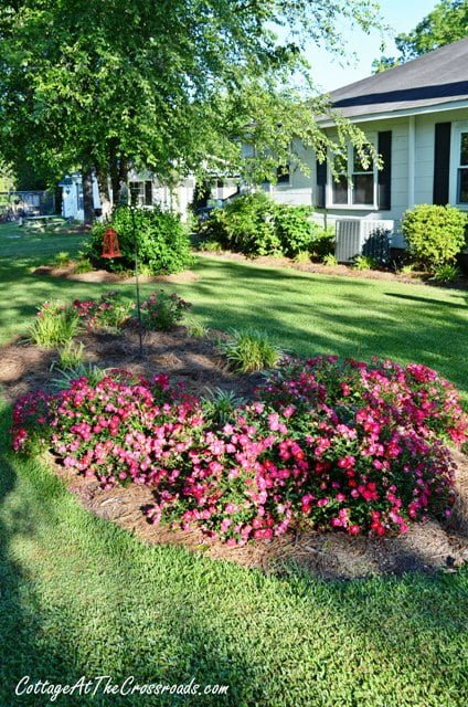 Creating Drift Roses Bed Cottage Crossroads