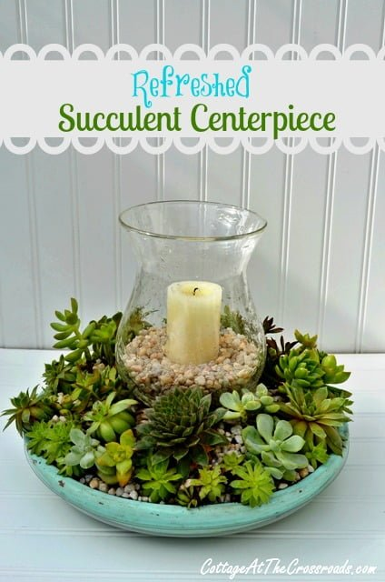 Refreshed Succulent Centerpiece