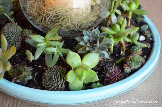 Succulent Centerpiece2 004