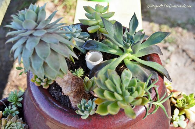planting succulents in strawberry pots