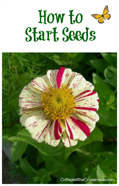How to Start Seeds | Cottage at the Crossroads