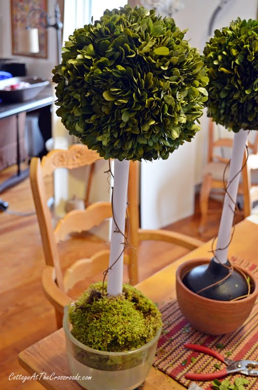 Diy Preserved Boxwood Topiary Cottage At The Crossroads