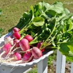 5 Tips for First Time Vegetable Gardeners   Cottage at the Crossroads