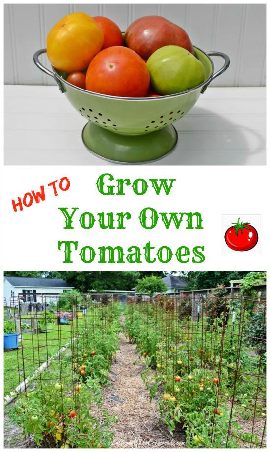 How to Grow Your Own Tomatoes | Cottage at the Crossroads