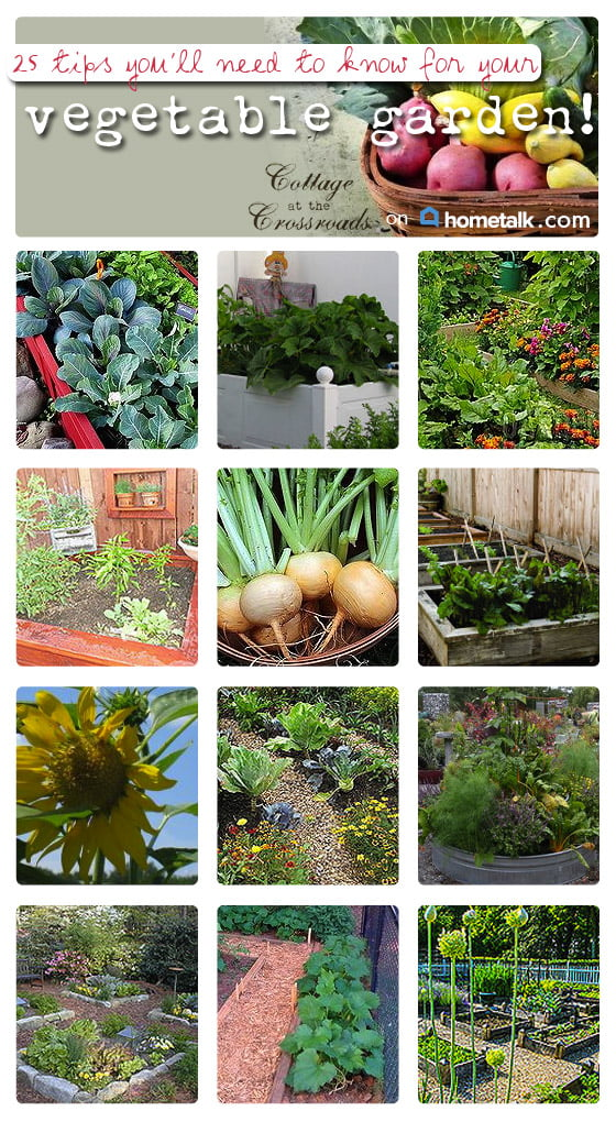 25 Vegetable Garden Tips from Hometalk