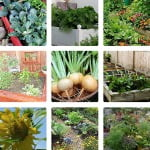 garden tips, tutorials, and tours
