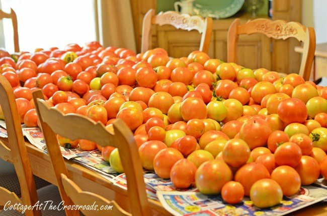 tomatoes | Cottage at the Crossroads