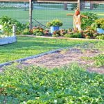 How to have a weed-free vegetable garden | Cottage at the Crossroads