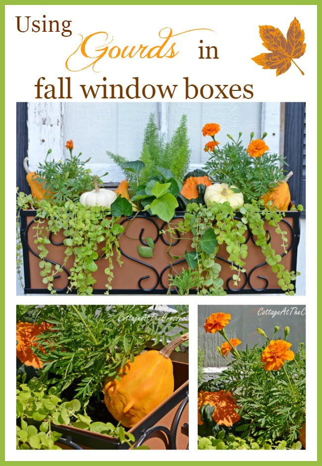 fall window boxes   Cottage at the Crossroads