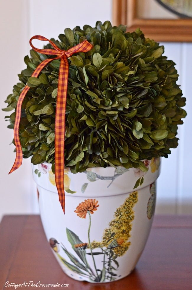 fall preserved boxwood orb | Cottage at the Crossroads