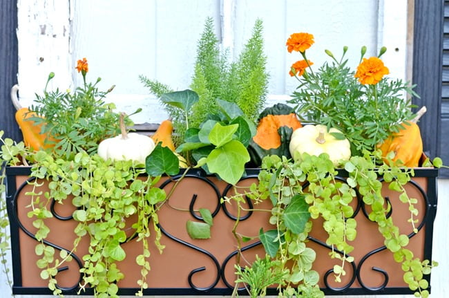 Gourds in Window Boxes | Cottage at the Crossroads