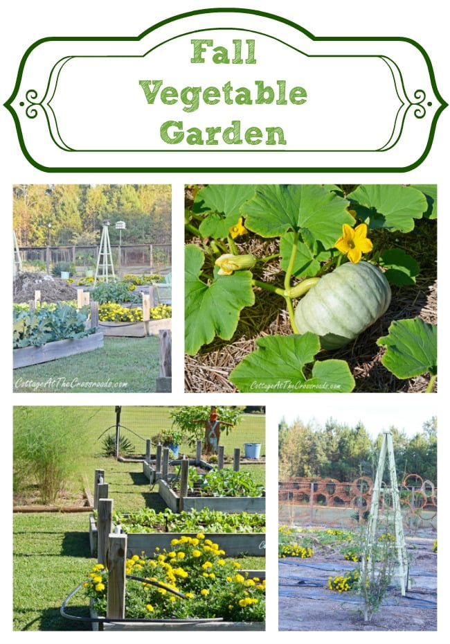 Fall Vegetable Garden | Cottage at the Crossroads