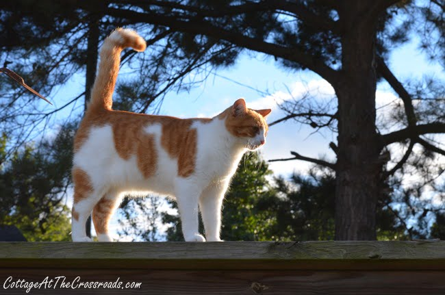 Cat on the garden fence | Cottage at the Crossroads