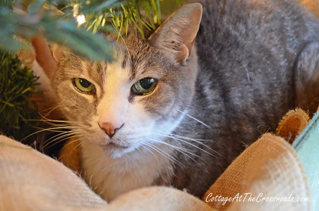 Rascal under the tree | Cottage at the Crossroads