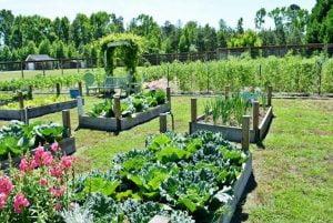 Evolution of a Garden