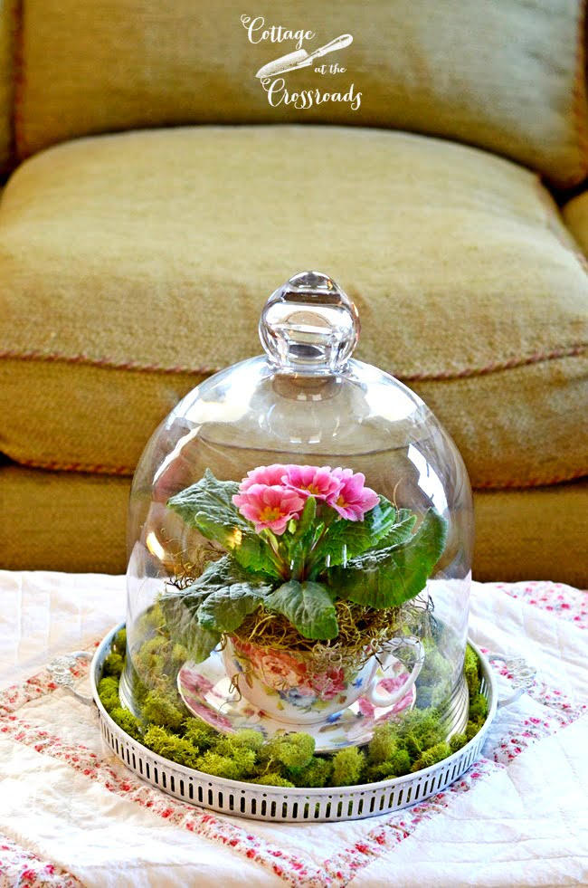Primroses under a Glass Cloche | Cottage at the Crossroads