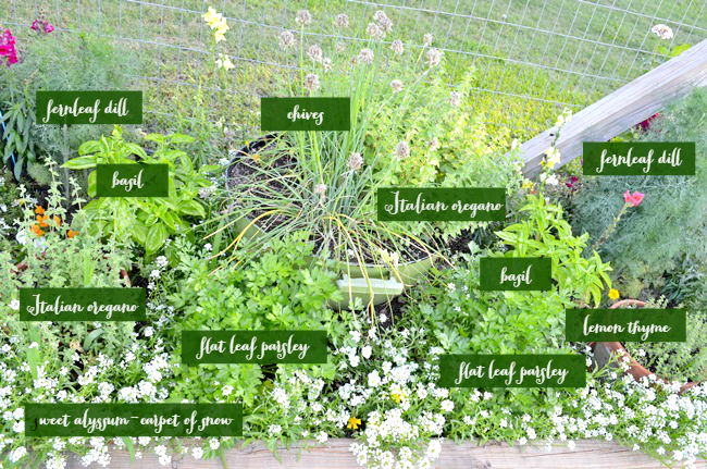 Common Culinary Herbs | Cottage at the Crossroads