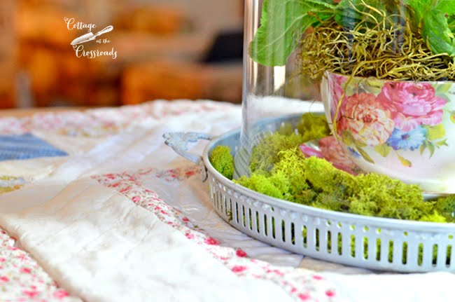 Spring under a Glass Cloche | Cottage at the Crossroads