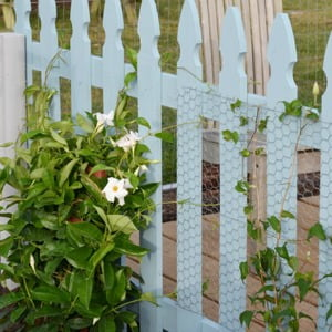 blue picket fence