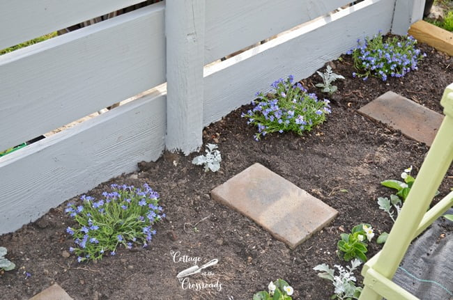 Blue Lithodora | Cottage at the Crossroads