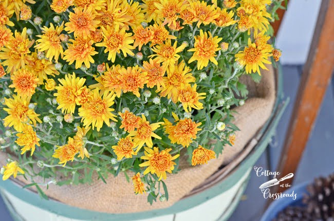 autumn mum | Cottage at the Crossroads