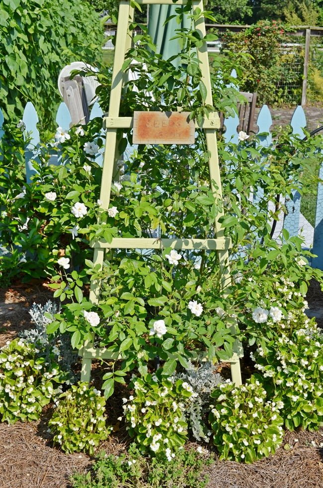 white climbing rose on a wooden obelisk | Cottage at the Crossroads