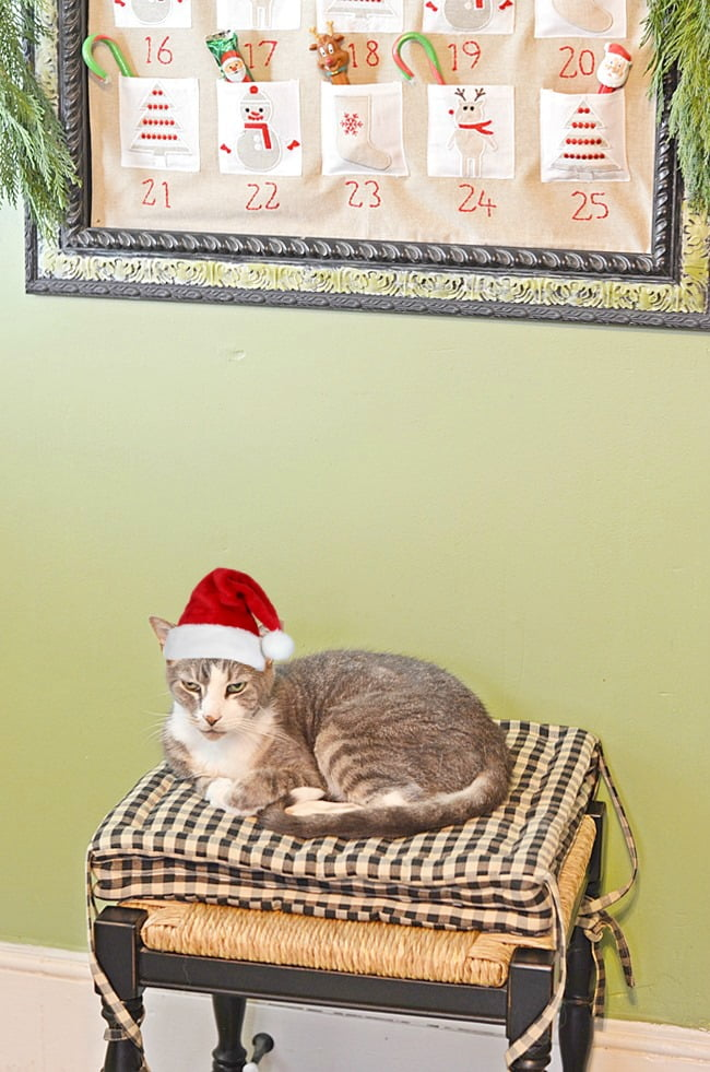 Rascal the cat under the advent calendar