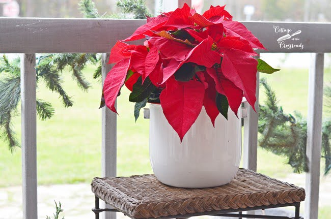 red poinsettia in an old enamalware bucket