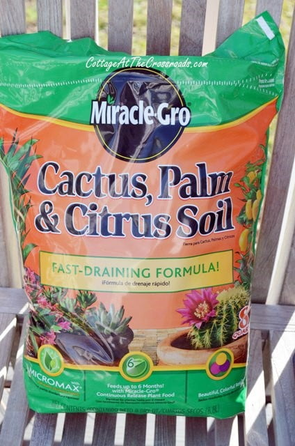 soil for succulents