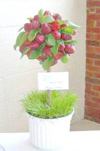 strawberry topiary