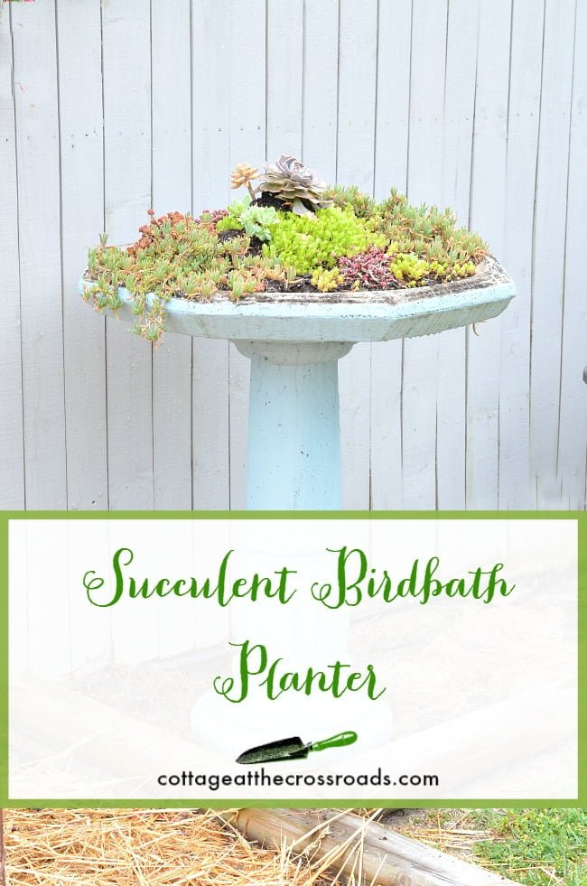 Repurposed Succulent Birdbath Planter | Cottage at the Crossroads