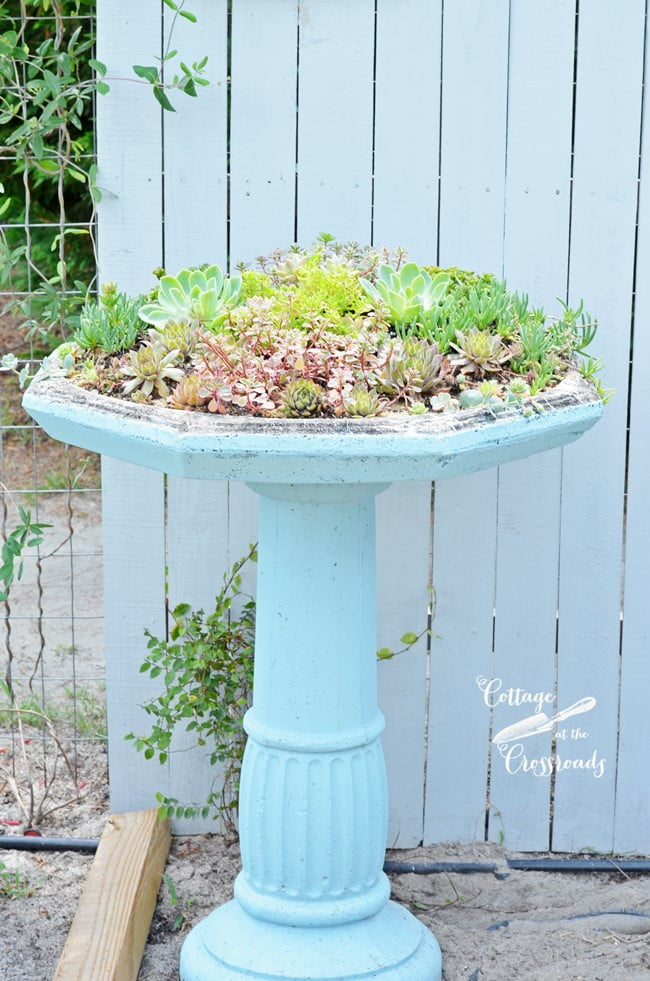succulent birdbath planter | Cottage at the Crossroads