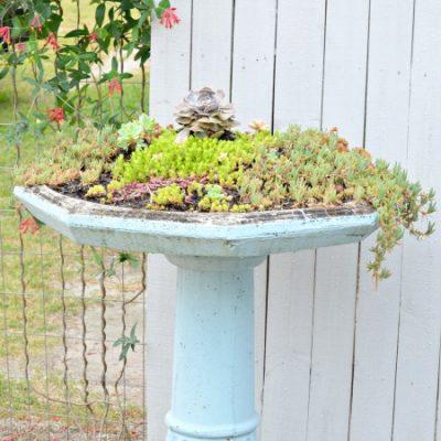 Succulent Birdbath Planter