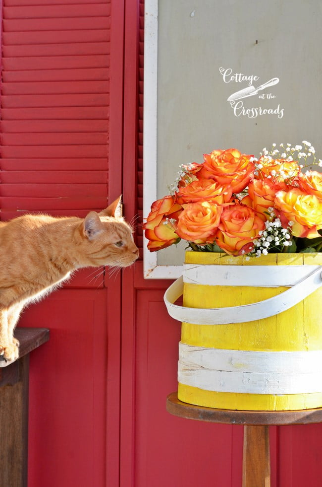 Henry the cat smelling the roses | Cottage at the Crossroads