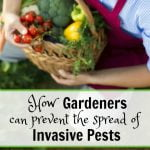 How Gardeners Can Prevent the Spread of Invasive Pests