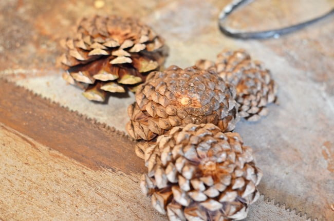 cutting pine cones to make zinnia flowers