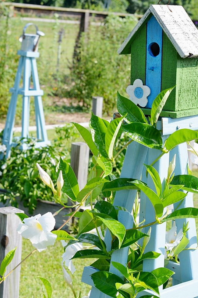 blue trellises in raised beds in the garden