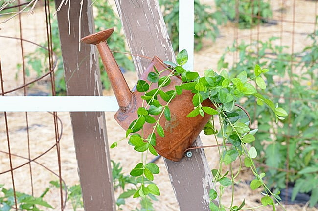 miniature watering can with a plant
