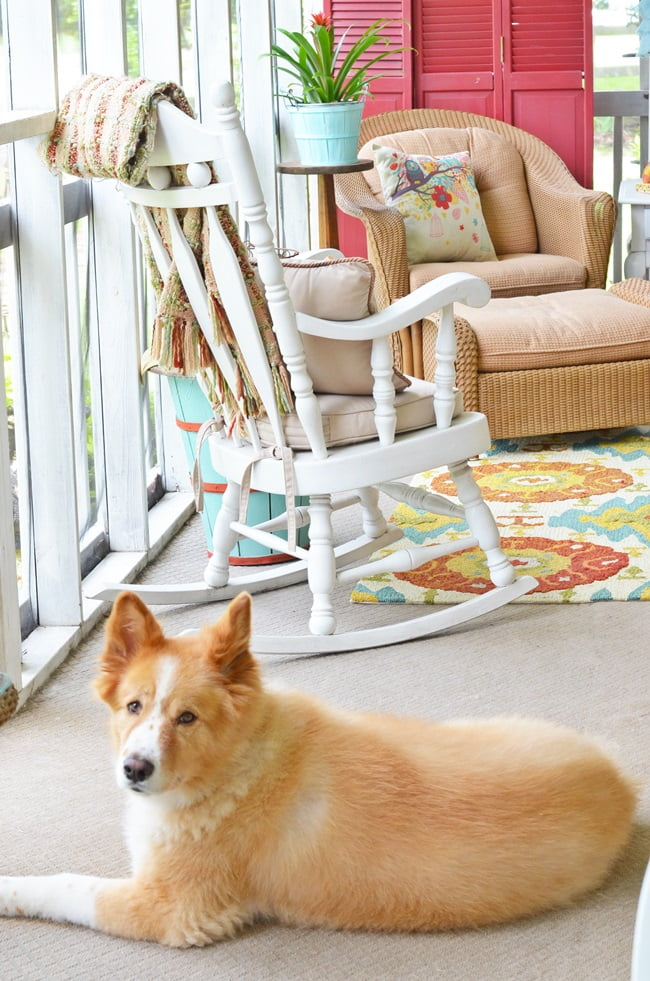 Lucy on our fall porch
